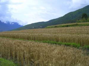 Bhutan farm