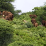elephants pumziko 1