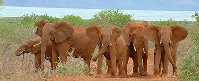 Elephants seen on game drive