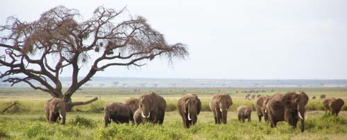 Africa Safari Kenya