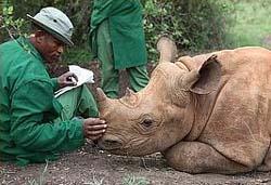 Sheldrick orphanage rhino